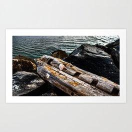 Shell on a Log Art Print