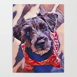 The Schnoodle - A Schnauzer Poodle Mix Breed Poster