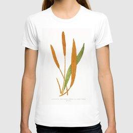 Edward Joseph Lowe - Acrostichum Cuspidatum T-shirt