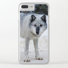 Lone wolf of the Canadian Rocky Mountains Clear iPhone Case