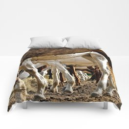 Endlessly Comforters