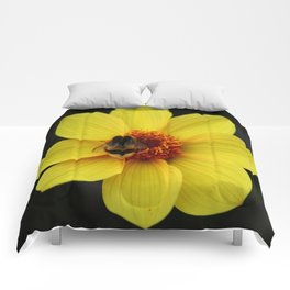 Dahlia  with Bumble Bee Comforters