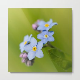 Forget-me-not Flowers On Natural Green Bokeh Background #decor #society6 #buyart Metal Print