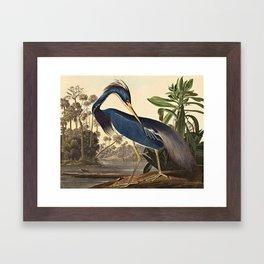 John James Audubon - Louisiana Heron Framed Art Print