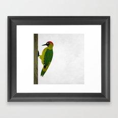 Green Woodpecker Framed Art Print
