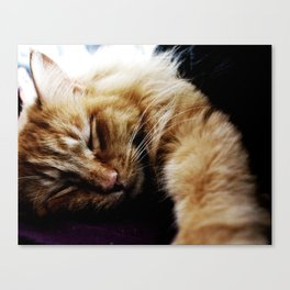 This lazy thing? Canvas Print