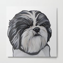 Herbie the Shih Tzu - White Background Metal Print