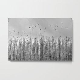 Wild Birds Flying. Foggy Sunrise. Bw Metal Print