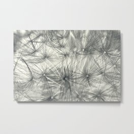 Dandelion 3 Metal Print