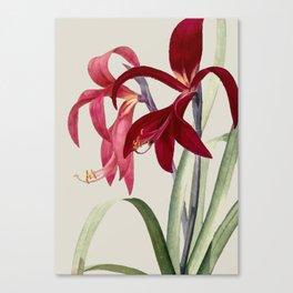 Red Vintag Flowers Canvas Print