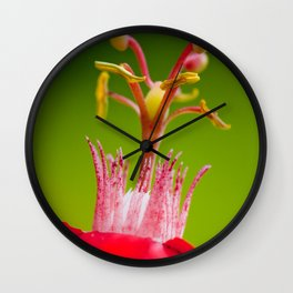 Macro Photography : Red Flower (Passiflora) Pollen Wall Clock