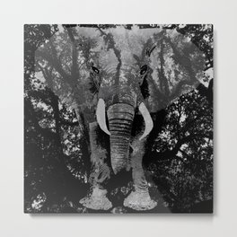 ELEPHANT SAFARI INCOGNITO AND TREE BRANCHES BLACK AND WHITE Metal Print