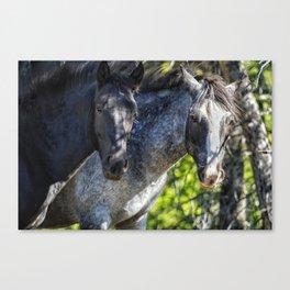 Mica and Malpais - Pryor Mustangs Canvas Print