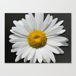 Contemporary White Daisy on Grey Pop Of Yellow Art A490 Canvas Print