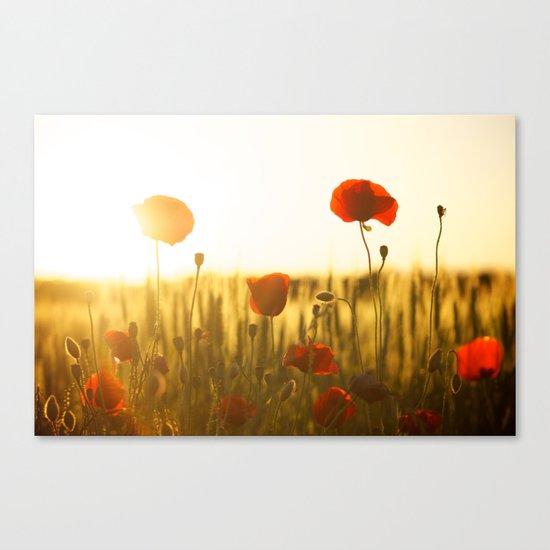 Sunset tulipe Canvas Print