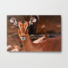 Impala Female Metal Print
