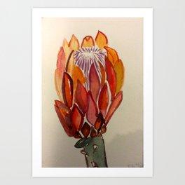 South Africa Protea Art Print