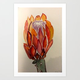 South Africa Protea Art Print