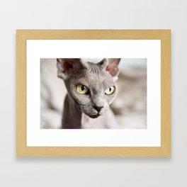 Kitty with attitude Framed Art Print