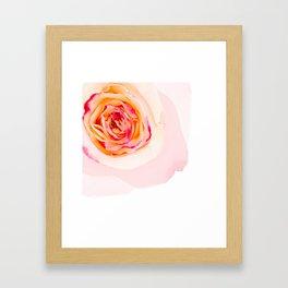 Mixed Rose Framed Art Print