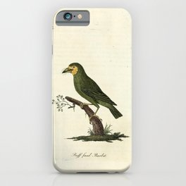 John Latham - A General History of the Birds, Vol 3 (1821) - Plate 52: Buff-Faced Barbet iPhone Case