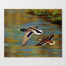Mallard Ducks in Flight Canvas Print