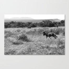 Running Wildebeest Canvas Print