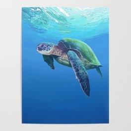 Sea Turtle pattern Poster