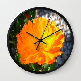 Bright Orange Marigold In Bright Sunlight Wall Clock