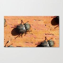 PLNPG   Beetle Canvas Print