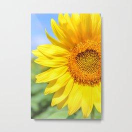 Yellow Sunflower, Blue Sky Metal Print