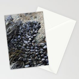 Mussel Bed on Ocean Weathered Rocks Stationery Cards