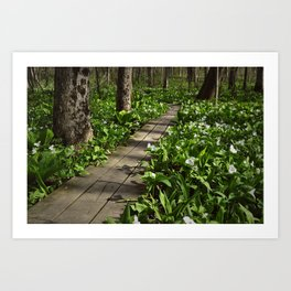 Wildflower Walkway Art Print