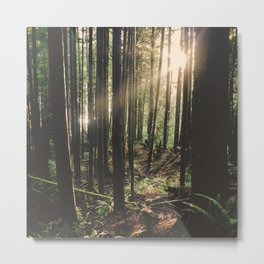 Sun in the Rainforest Metal Print