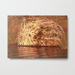 Uprooted Tree Metal Print