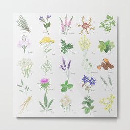 Burst of herbs Metal Print