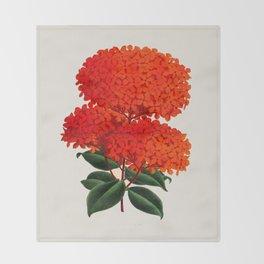 Vintage Scientific Flower Illustration Large Red Flowers Large Orange Petals Throw Blanket