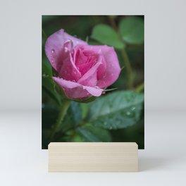 Pink Rose with Drops Mini Art Print