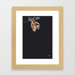 Brown Moth Framed Art Print