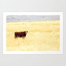Grazing Cow Art Print