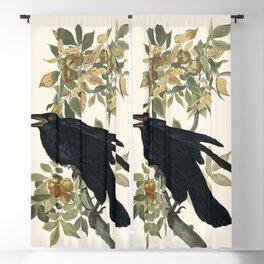 Audubon plate - Raven (Corvux corax) Blackout Curtain