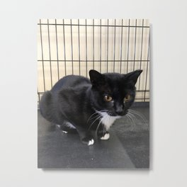 Adoptable Tuxedo Black & White Dutchess Cat Metal Print