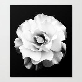 Black and White Rose Blossom... Canvas Print