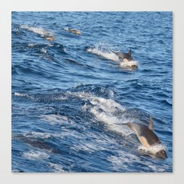 Dolphins Up and Down Canvas Print