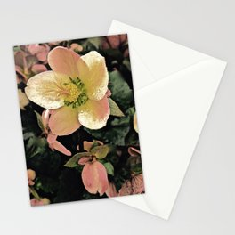 Helleborus Stationery Cards