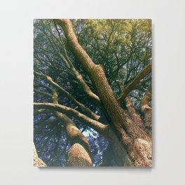 Tree at Malahide Metal Print