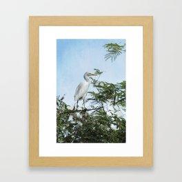 Cattle Egret In a Tree Framed Art Print