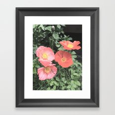 Papaveraceae Framed Art Print