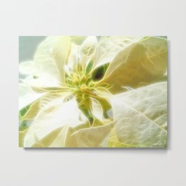 Pale Yellow Poinsettia 1 Angelic Metal Print