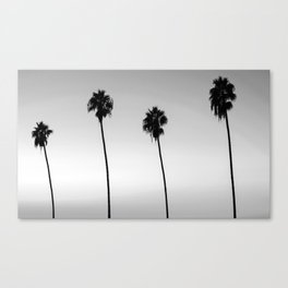 Black and White San Diego Palms - California Canvas Print